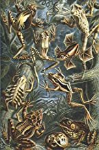 """Haeckel Scientific Biological Art Notebook: Vintage Science Illustrations N°34 from """"kunstformen Der Nature"""" / """"art Forms in Nature""""; Composition Journal with 120 Pages of Blank Wide Ruled Line Paper"""