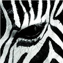 Self-Adhesive Wallpaper - Zebra Crossing - Square Format 288 x 288 cm