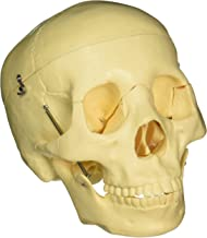 Best budget life size skull Reviews