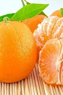 Fina Sodea Tree, Seedless Clementine Mandarin Citrus (Excludes: CA,TX,LA,AZ)