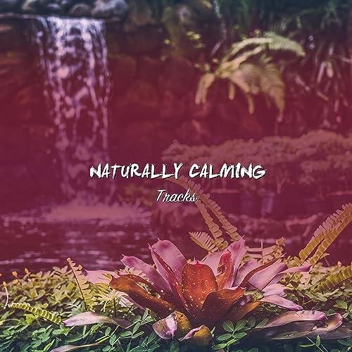 Amazon.com: 18 Pistas Naturalmente Calmantes para el ...
