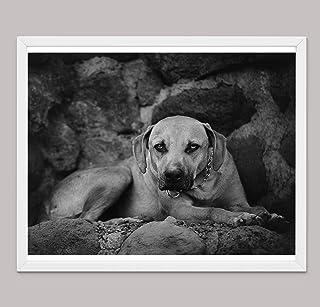 Regali di Pitbull Per Gli Amanti Dei Cani, Stampe su Tela di Poster Varie Dimensioni, Regali Per Gli Amanti Dei Cani, Rega...