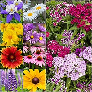 Package of 30,000 Seeds, Perennial Wildflower Mixture (100% Pure Live Seed) Non-GMO Seeds by Seed Needs