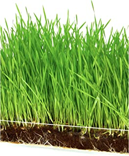 """Microgreen Organic Wheatgrass 3 Pack Refill KIT – Pre-Measured Soil + Seed, USE with Window Garden Multi-Use 15"""" x 6"""" Planter Tray. (Tray NOT Included). Enough to Sprout 3 Crops of Superfood."""