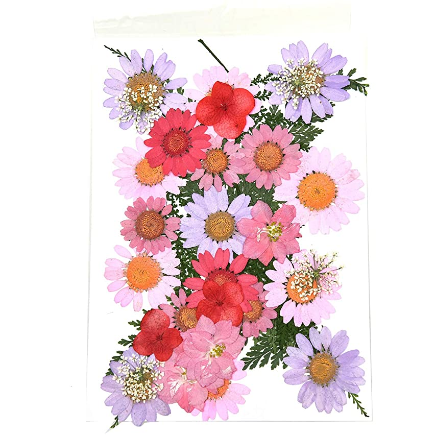 Monrocco Multicolor Real Pressed Dried Flowers DIY Preserved Flower Decorations for Art Craft DIY Resin
