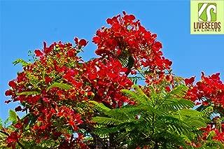 gulmohar flower tree