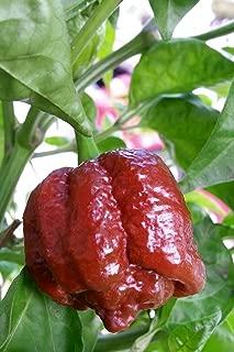 brown moruga pepper