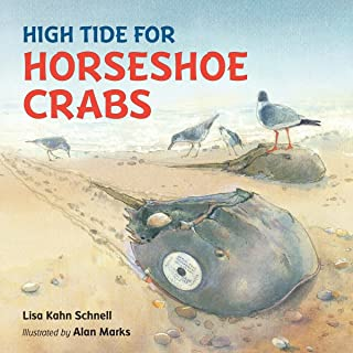 High Tide For Horseshoe Crabs