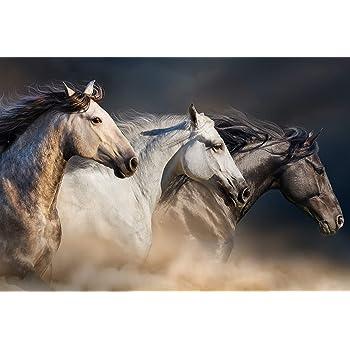 A1Wild Horses Poster Art Print 60 x 90cm 180gsm Mustang Herd Horse Gift #8532