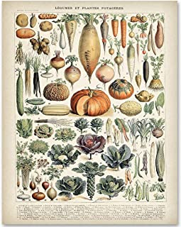 Antique Heirloom Vegetables - 11x14 Unframed Art Print - Makes a Great Gift Under $15 for Kitchen Decor