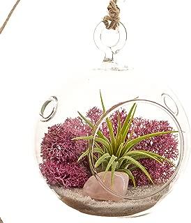 Mini Air Plant Terrarium with Dusty Rose Moss, Natural White Sand & Rose Quartz / 3