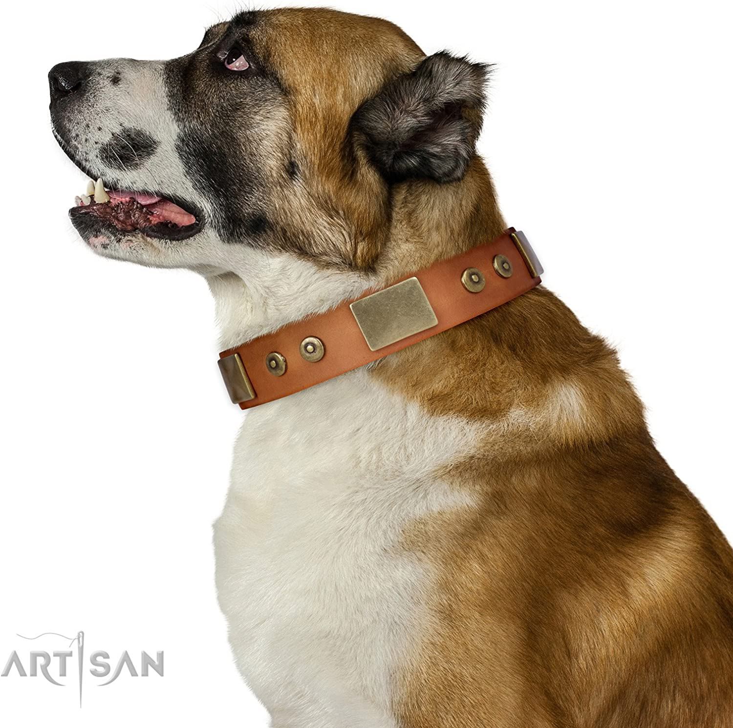 FDT Artisan 28 inch Stylish Tan Leather Dog Collar with Plates  Strict & Confident  1 1 2 inch (40 mm) Wide  Gift Box Included