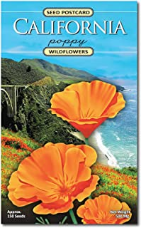 California Poppy Wildflower Seed Packet - Enjoy The Natural Beauty of California Flowers in Your Own Home Garden - State Flower