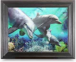 9 dolphins picture