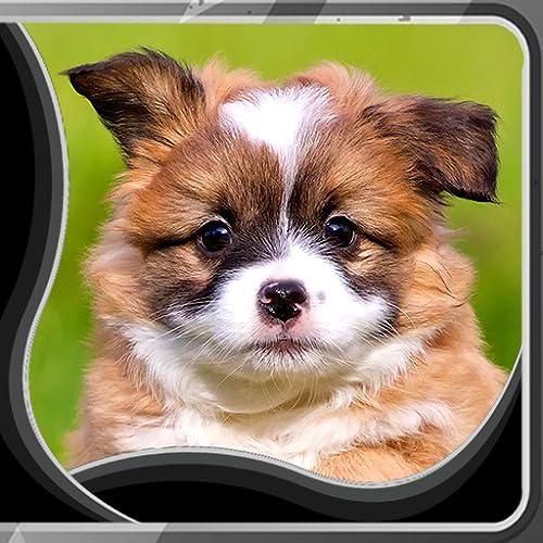 Filmes de Filmes ao vivo de filhotes de cachorro