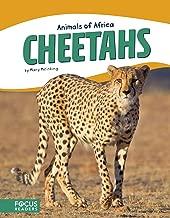 Cheetahs (Focus Readers: Animals of Africa: Beacon Level)
