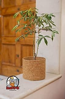 HIPPO Eco Friendly Planter Pots for Garden; Unbreakable_Jute Terra_8 Inch Width X 6 Inch Height- Pack of 2