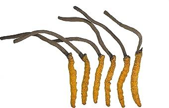 WILD Cordyceps, Whole Himalyan Cordyceps Sinensis Mushroom, Genuine and Very Rare, High Grade, Boost Energy, Reduce Stress For Men and Women, 3 grams