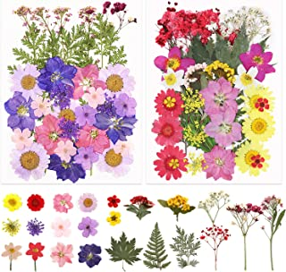 Apsung 71 PCS Real Dried Pressed Flowers Leaves Petals with Greeting Card, Mixed Multiple Natural Dry Flowers, Colorful Da...