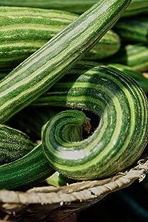 Cucumber Armenian Yard Long Snake Melon Seeds #SHTM (500)