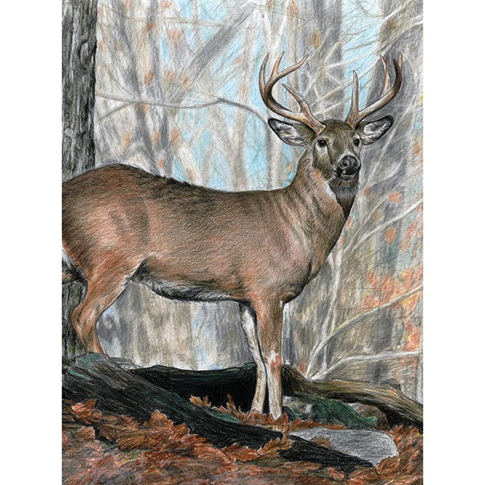 Royal Brush Color Pencil by Number Kit, 8.75 by 11.75-Inch, Whitetail Buck