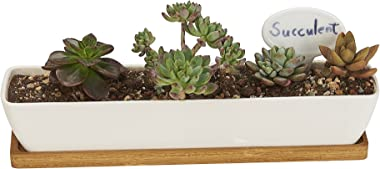 FLOWERPLUS Planter Pot Indoor, 11 Inch Long Rectangle White Ceramic Small Succulent Cactus Flower Plant Container with Bamboo
