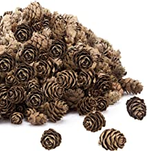 Apipi 200pcs Thanksgiving Rustic Mini Brown Pine Cones in Bulk - Christmas Natural Pine Cones Ornaments for Home Decoratio...