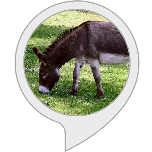 Tiergeräusche: Esel