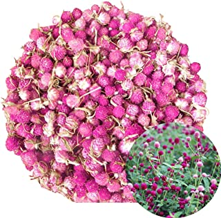 TooGet Dried Gomphrena globosa Flower, Natural Globe Amaranth Flower Wholesale Best for Flower DIY, Sachets, Wedding Party Decoration, Potpourri, All Kinds of Crafts - 4 OZ