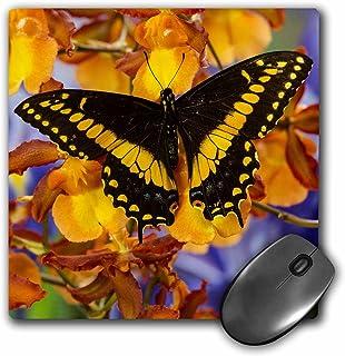 "3D 玫瑰哑光鼠标垫 - 8 x 8 Black Swallowtail Male From Costa Rica Papilio Polyxenes 8 x 8"""