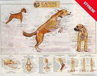 k9 anatomy chart