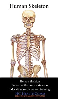 Human Skeleton, e-chart.: Anatomical e-chart of the human skeleton, for education, medicine and training.