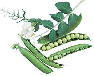 Burpee Garden Sweet Pea Seeds  200 seeds
