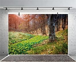 Best sunshine marigold photography Reviews