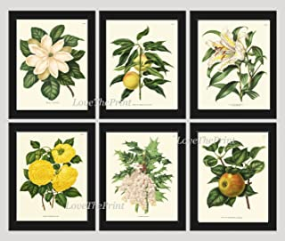 Botanical Flower Print Set of 6 Prints Antique Beautiful White Lily Grapes Fruit Magnolia Yellow Rose Apple Spring SUmmer Garden Nature Home Room Decor Wall Art Unframed