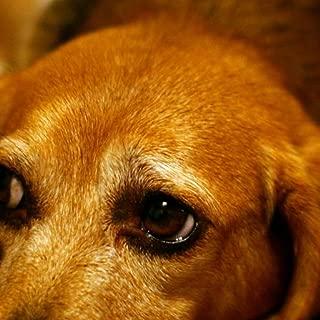 sad dog Wallpaper -- HD Wallpapers of sad dogs!