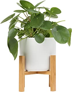 Costa Farms Chinese Money Plant, Pilea Peperomioides, Sharing Indoor Plant, Mid Century Planter and Plant Stand, White, 14-Inches Tall