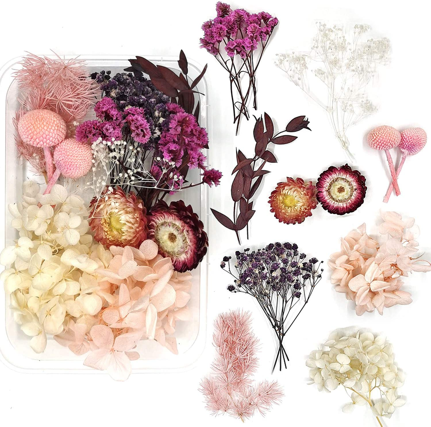 Real Natural Dried Flowers Popular brand for Mixed Craft Colorful Art Multiple In stock