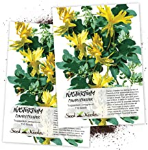 Seed Needs, Canary Creeper Nasturtium (Tropaeolum peregrinum) Twin Pack of 110 Seeds Each