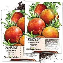 Seed Needs, Golden Detroit Beet (Beta vulgaris) Twin Pack of 600 Seeds Each Non-GMO