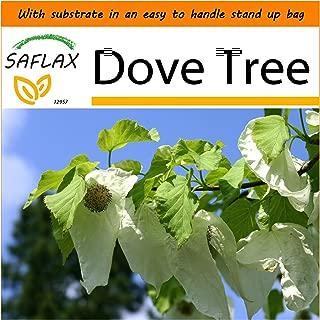 SAFLAX - Garden in The Bag - Dove Tree - 1 Seeds - Davidia involucrata