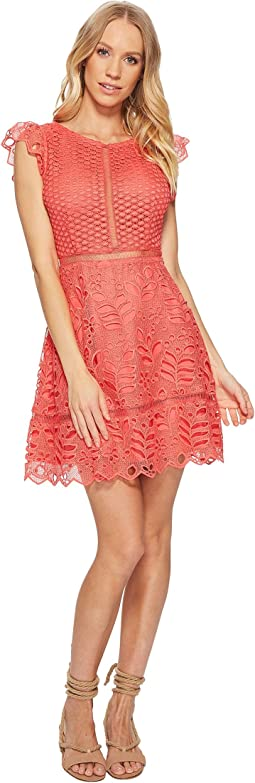 BB Dakota Ariane Lace Fit and Flare Dress