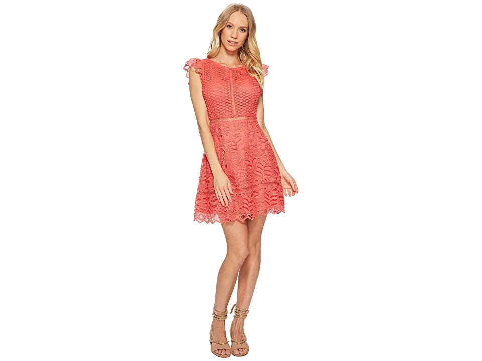 BB Dakota Ariane Lace Fit and Flare Dress (Cantaloupe) Women