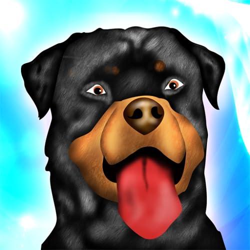 Hund Agility Hindernisrennen Dressurwettbewerb