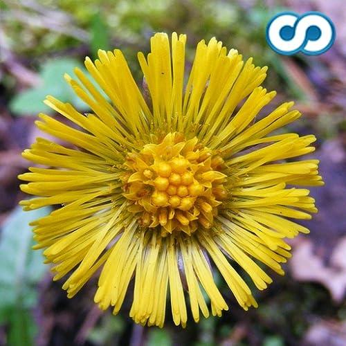Blumen Arten Trivia Quiz