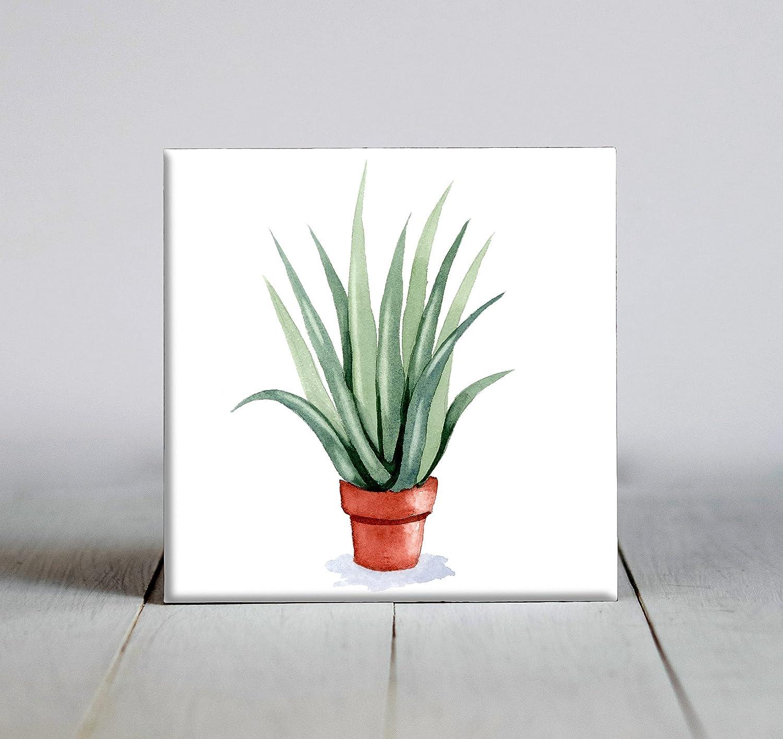 Aloe Vera Plant Watercolor Art X Framed Tile mart 6 Fresno Mall Decorative