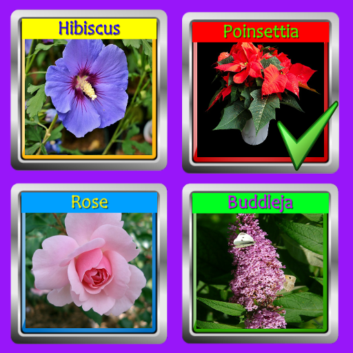 The Garden Quiz: Flowers Pro