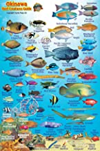 Okinawa Japan Reef Creatures Guide Franko Maps Laminated Fish Card 4