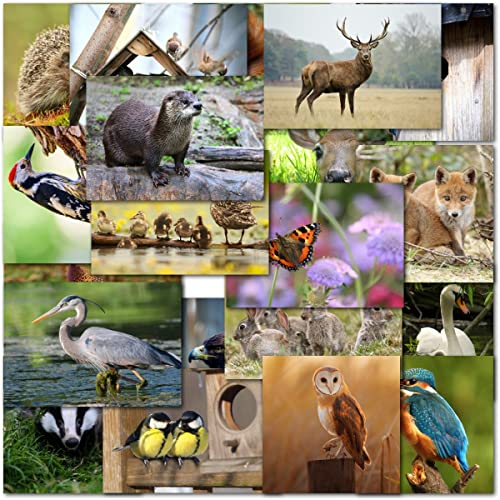 Pack Of 20 Mixed UK Wildlife Premium Birthday Blank Greeting Cards