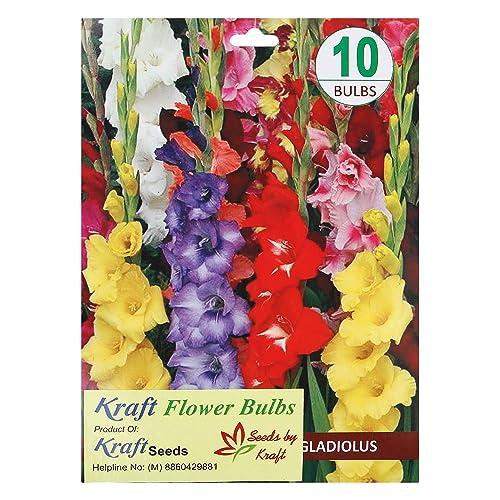 Kraft Seeds Gladiolus Flower Bulb Mix (Pack of 10)